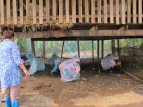 Soil sampling at goat farm