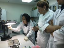 Demonstration of Leptospira on LVW agar for visitor