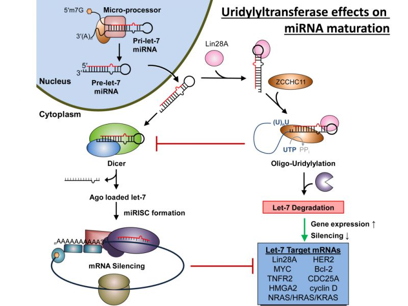 Targeting Cancer Stem Cell Biology By Enzymatic Inhibition