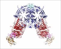 Semaphorin-plexin recognition complex (Janssen et al Nature 2010)