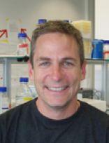 Professor Martin Bachmann
