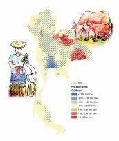 Leptospirosis in Thailand